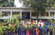 বাসাইলে শতাধিক শিক্ষার্থীদের মাঝে গাছের চারা বিতরণ