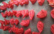 বাসাইলে 'এসএসসি ২০০৮ ব্যাচ'-এর উদ্যোগে ঈদ সামগ্রী বিতরণ