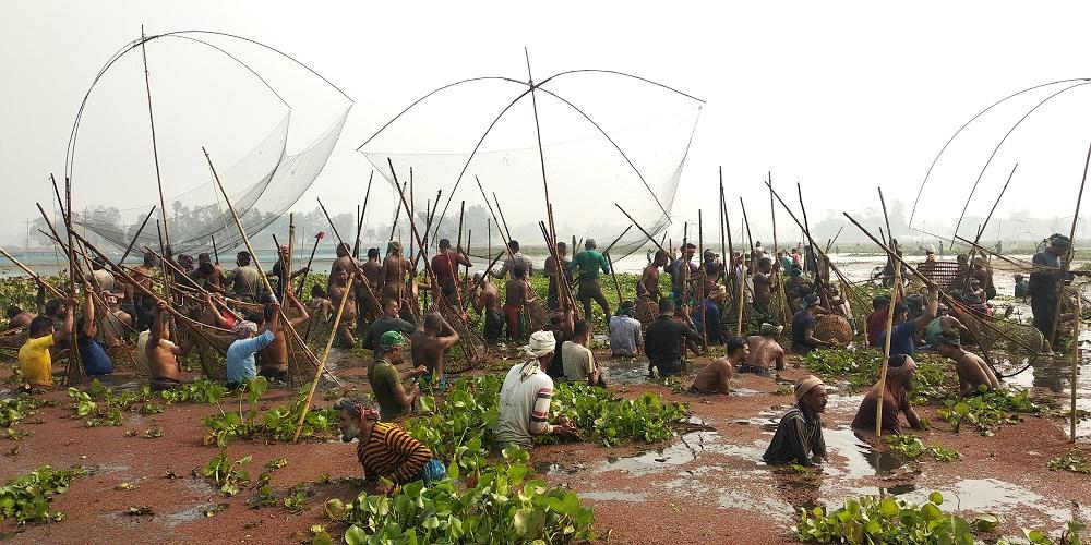 বাসাইলের আতিলা বিলে মাছ ধরা উৎসব পালিত