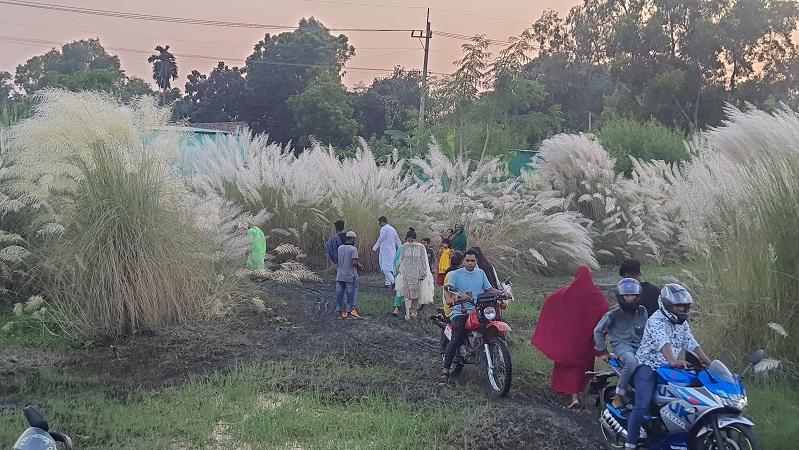 বাসাইলে কাশফুলের হাতছানিতে বিমোহিত দর্শনার্থীরা